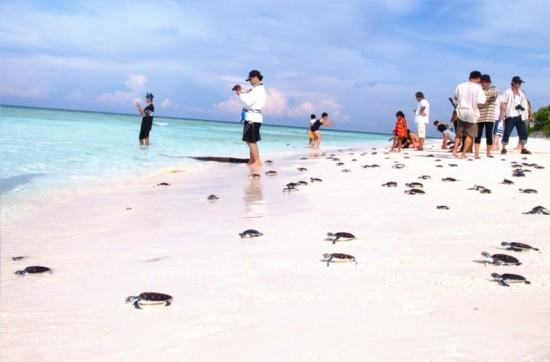 กิจกรรมปล่อยลูกเต่าคืนสู่ทะเล ณ หาดไม้ขาว