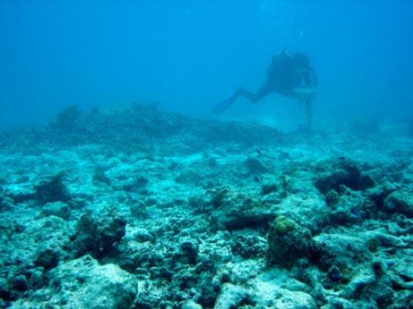 ปะการังโลกร้อน