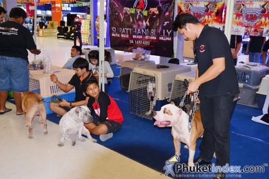 Dog Show 2013 @ Central Festival Phuket East
