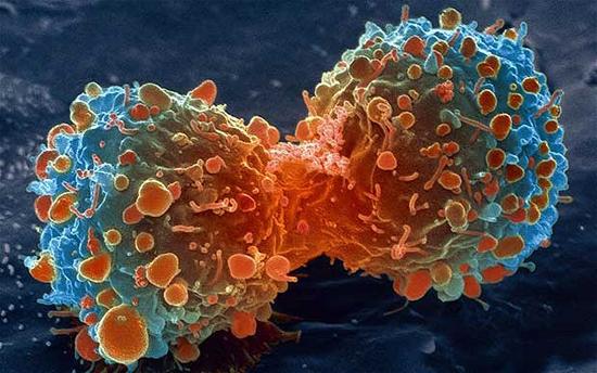 ผลการวิจัยสมุนไพรพลูคาว ในการต่อต้านโรคมะเร็ง
