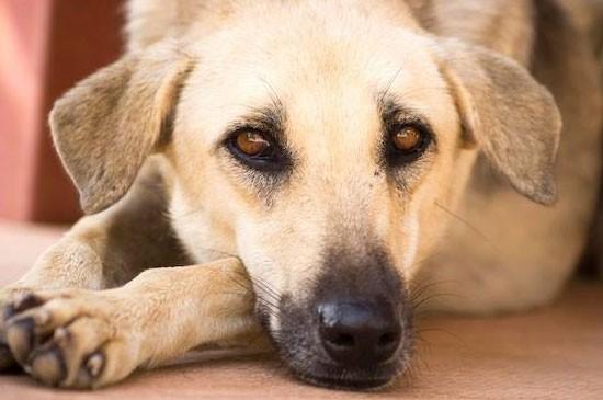 มูลนิธิเพื่อสุนัขในซอยบริการทำหมันสัญจรในพื้นเขาหลัก (พังงา) ตั้งเป้าทำหมันสุนัขและแมว 80%