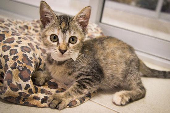 ลูกแมวล้นศูนย์พักพิงฯ มูลนิธิเพื่อสุนัขในซอยประกาศหาบ้าน