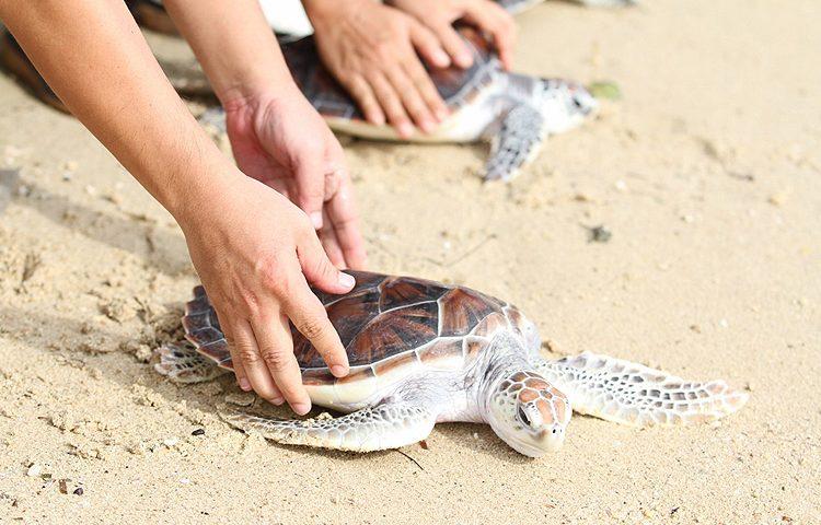 ลากูน่าภูเก็ต จัดกิจกรรมปล่อยเต่าสู่ท้องทะเล ครั้งที่ 23 ประจำปี 2560
