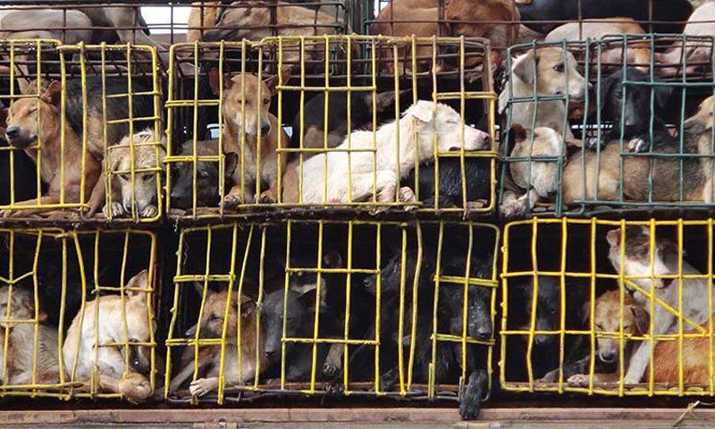 ซอยด๊อกร่วมยินดี ฮานอยประกาศยุติการค้า-บริโภคเนื้อสุนัขและแมว
