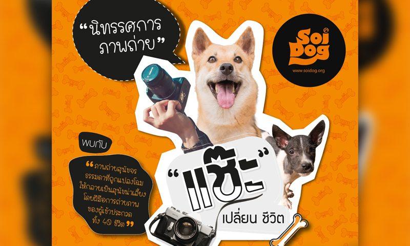 นิทรรศการภาพถ่าย แช๊ะ เปลี่ยน ชีวิต – เปลี่ยนมุมมองใหม่ให้สุนัขจรน่ารักน่าเลี้ยง