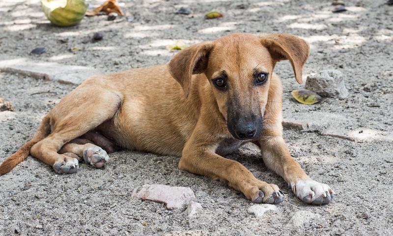 พิษสุนัขบ้า – โรคระบาดฤดูร้อนจริงหรือ?