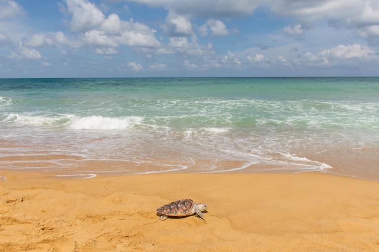 โรงแรม เจดับเบิ้ลยู แมริออท ภูเก็ต รีสอร์ท แอนด์ สปา ร่วมกับมูลนิธิเพื่อการอนุรักษ์เต่าทะเล หาดไม้ขาว ปล่อยเต่าตนุ 40 ตัว สู่ท้องทะเลอันดามัน เพื่อถวายเป็นพระราชกุศลเนื่องในโอกาสมหามงคลเฉลิมพระชนมพรรษา สมเด็จพระเจ้าอยู่หัว มหาวชิรวงกรณ บดินทรเทพยวรางกูร