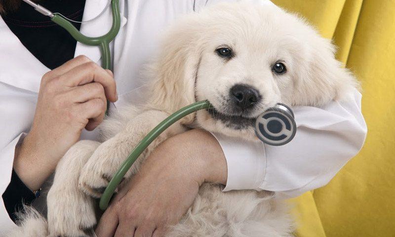 เติมความสุขและบริการดีๆ จากโรงพยาบาลสัตว์ที่จะไม่ทำให้หมาแมวเครียด
