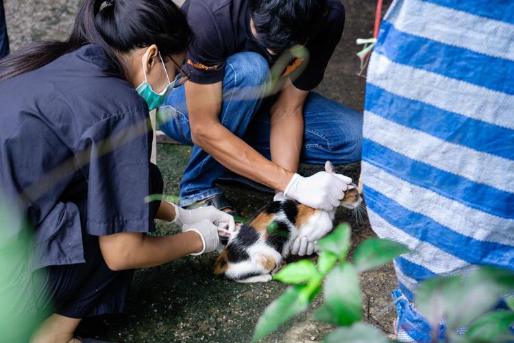 พิษโควิด19ทำหญิงสาวตกงานภูเก็ตแถมภาระสุนัขและแมว 16 ตัว